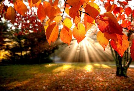 """Fotowettbewerb """"Herbst 2014″"""